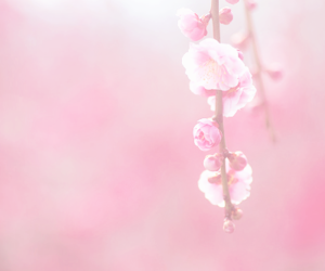 flower, pink, and japan image