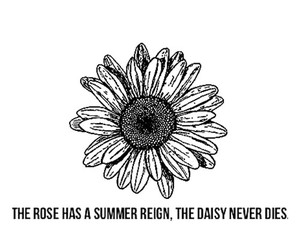 daisy and quote image