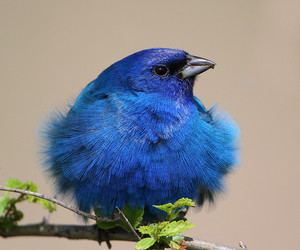 bird and blue image