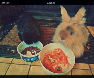 cat, rabbit, and food image