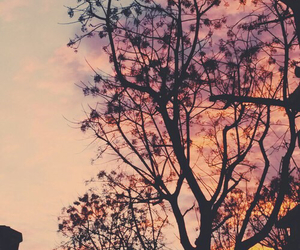 sunset, tree, and love image