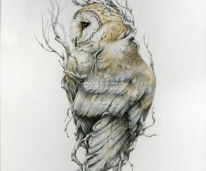 art, owl, and drawing image