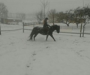 riding and reiten image