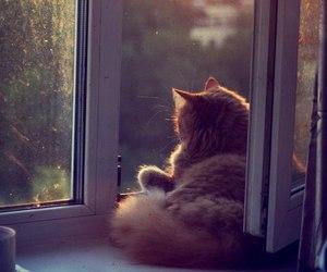 cat, window, and animal image