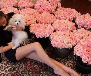 flowers, rose, and dog image