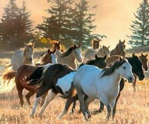 horses and animal image
