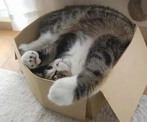 cat, box, and maru image