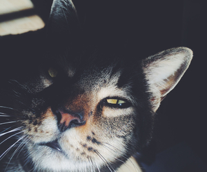 cat, Darkness, and eyes image