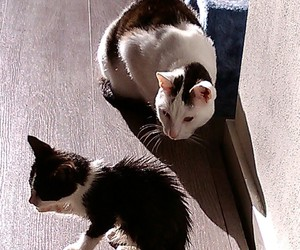 animals, cats, and friendship image