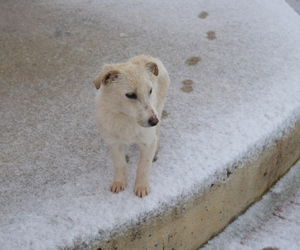 dog, love, and snow image