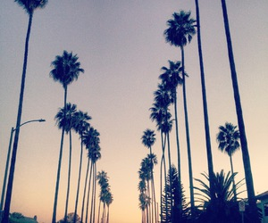 palm trees, tumblr, and wallpaper image