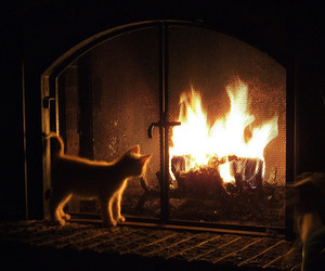 cat, fire, and warm image