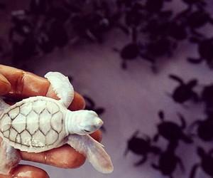 animals, lovely, and tartaruga image