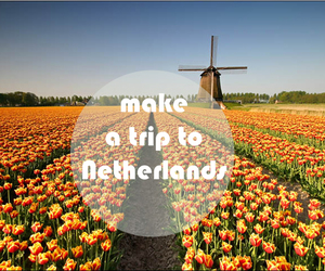netherlands, trip, and tullips image