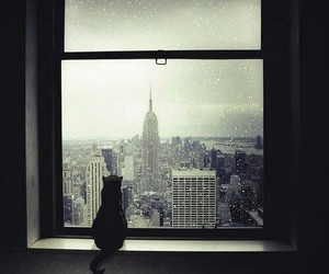 cat, new york, and window image