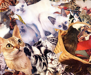 cat, collage crazy, and all collage image