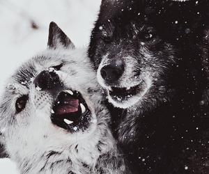 animal, beauty, and dark image