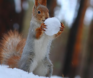 squirrel, winter, and cute image