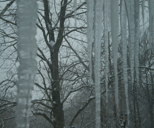 chilly, cold, and icicles image