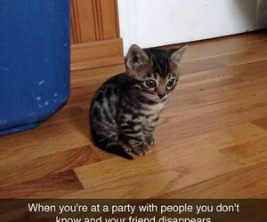 cat, funny, and party image