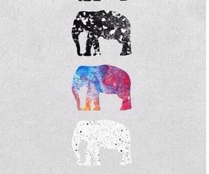 elephant, animals, and background image
