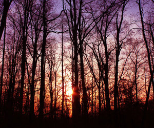 forest, sunset, and trees image