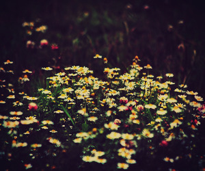 boho, colors, and flowers image