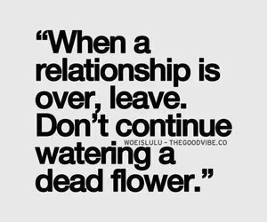 Relationship, quote, and flowers image