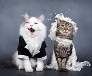 cat, wedding, and wedding cat image