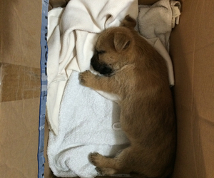 cute animals, puppies, and norwich terrier image