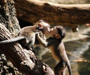 kiss and monkey image