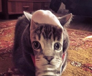 cat, funny, and socks image