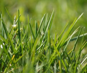grass, green, and high image