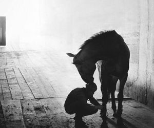 black and white and horse image