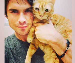 cat, ian somerhalder, and ian image
