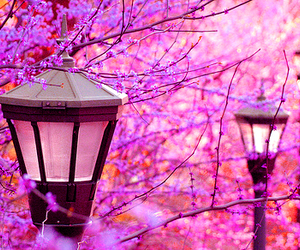 beautiful, narnia, and pink image