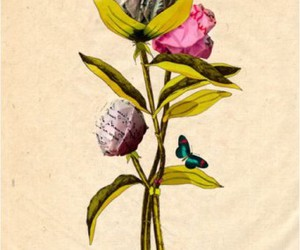flower and peonies image