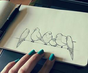bird, drawing, and nails image