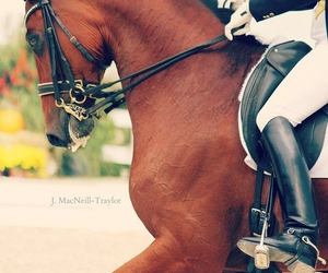 beauty, cut, and equestrian image