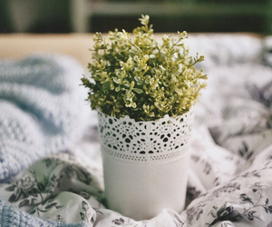 plant, vintage, and nature image