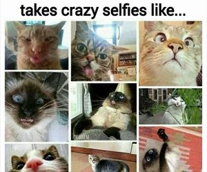 funny, cat, and crazy image