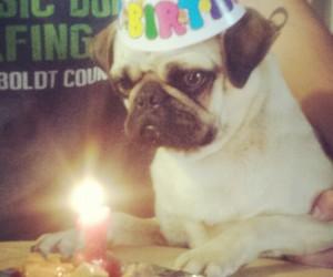 birthday, cake, and dog image