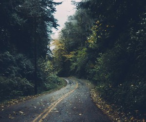 road, autumn, and forest image