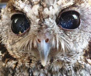 bird, photography, and eyes image