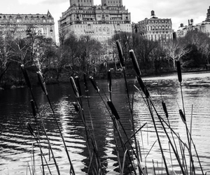 america, black and white, and Central Park image