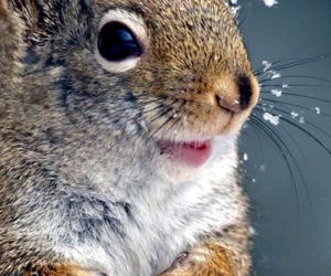 squirrel, animals, and cute image