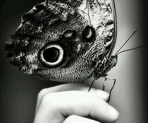 black and white, photography, and butterfly image