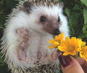 animal and flowers image