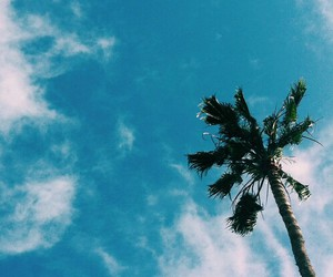 background, palm trees, and blue image