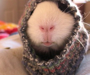 animal, funny, and rabbit image